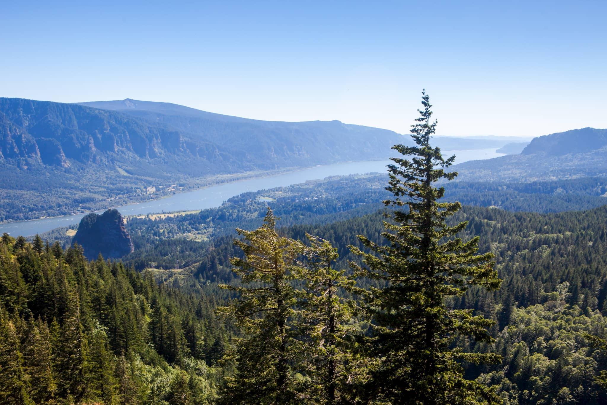 Columbia-River-Gorge-from-Hamilton-Mountain
